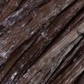 Madagascar-vanille-bonen
