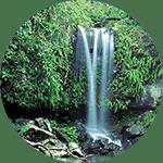 Papoea-nieuw-guineese