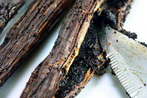 Vanillezaadjes verwijderen