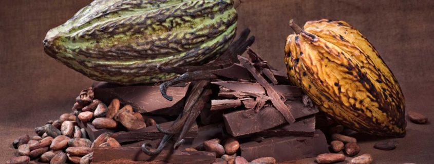 cacaobonen chocolade